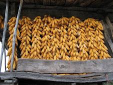 Horreo con panolles de maiz