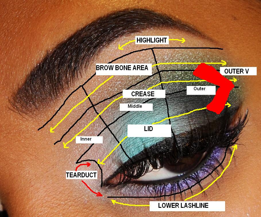 The fancy face tips for beginners eyeshadow placement and the fancy face ccuart