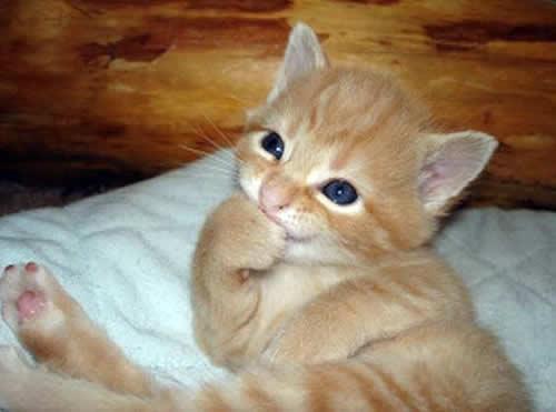 Gatitos bellos
