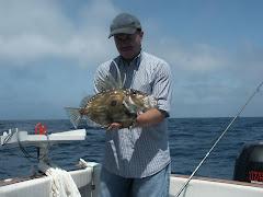 Peixe Galo - O Meu Pai