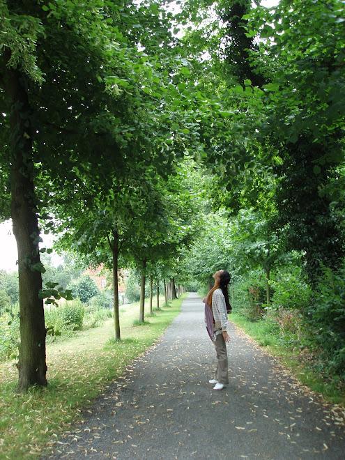 ヒルデスハイムの並木道
