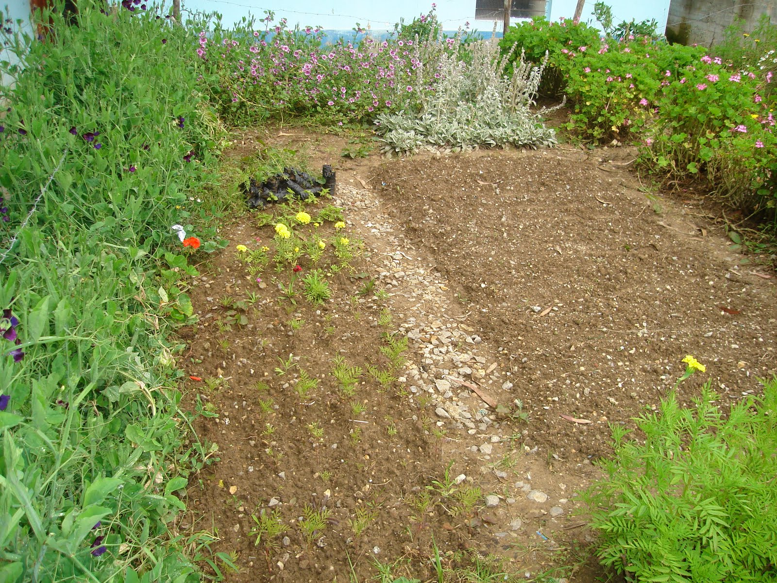 Molinopampa celendin proyecto jardin escolar for Proyecto jardineria