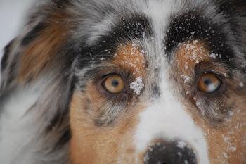 Snowy Pearl