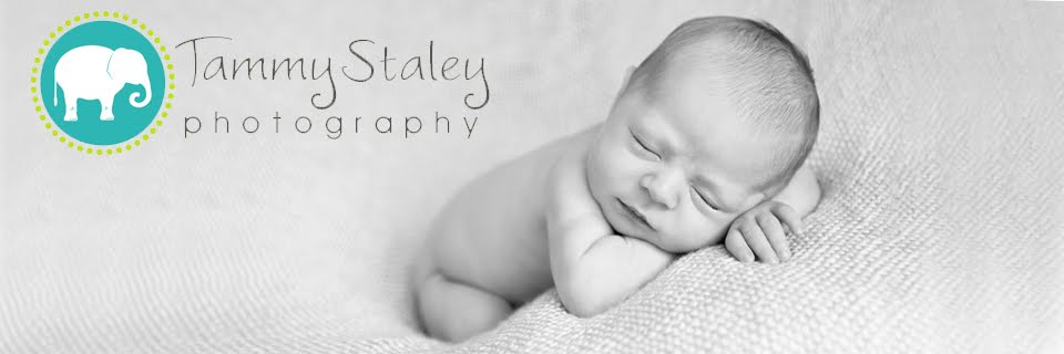 Staley Photography  ...Albuquerque Newborn, Baby, Children, Family and Senior Photographer