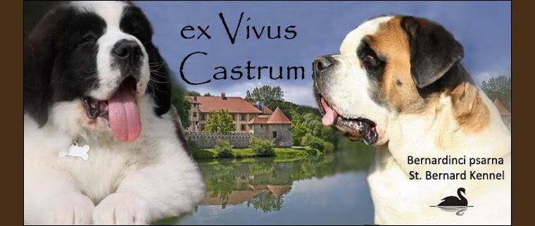 Bernardinka Tisa-ex Vivus Castrum