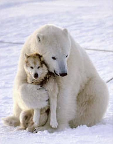 polar bear funny dog death hug