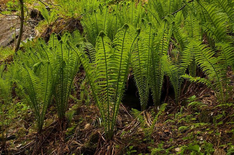 ormegress i hagen