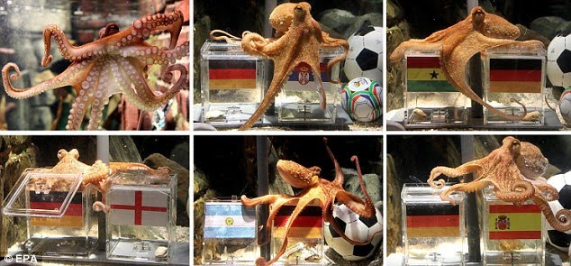 The World Cup Octopus. Paul correctly predicted the