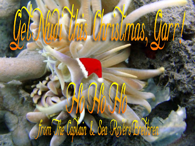 Funky Nudibranch Christmas Greetings