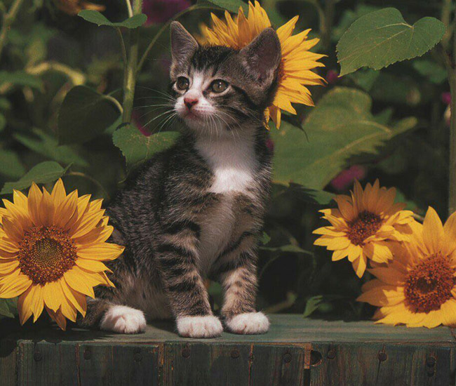 [imagenes-gatos-flores.jpg]