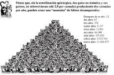 LA ESTERILIZACION DE PERROS Y GATOS ES LA UNICA SOLUCION