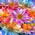 Nice and Cute Flowers