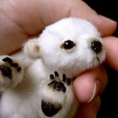 Funindecision This Is A Tiny Baby Polar Bear
