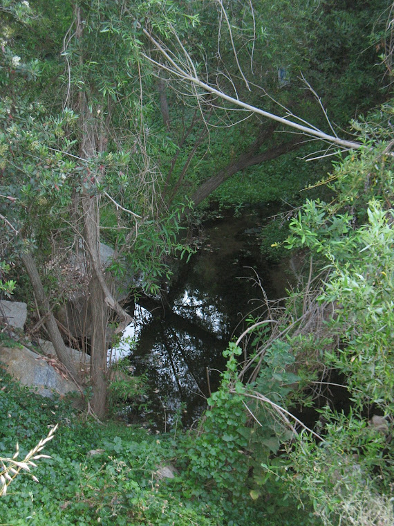 A Natural Creek in Carbon Canyon!