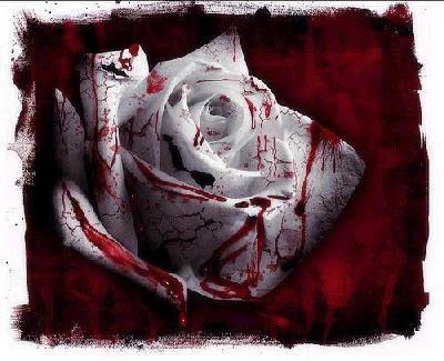 rosa+sangre