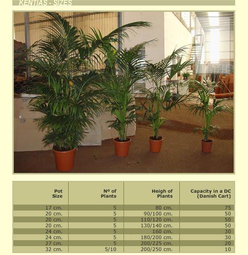Producci n de plantas unidad 4 visita a un vivero for Produccion de plantas en vivero pdf