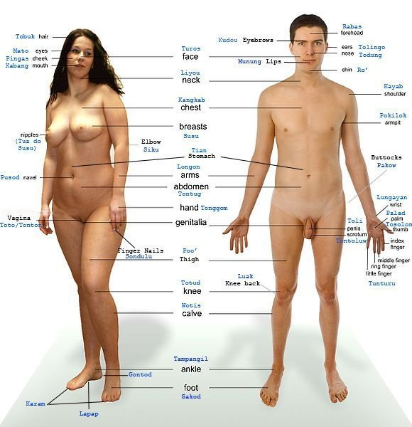 Women Body Parts Name English