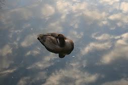 Schwimmschäfchen