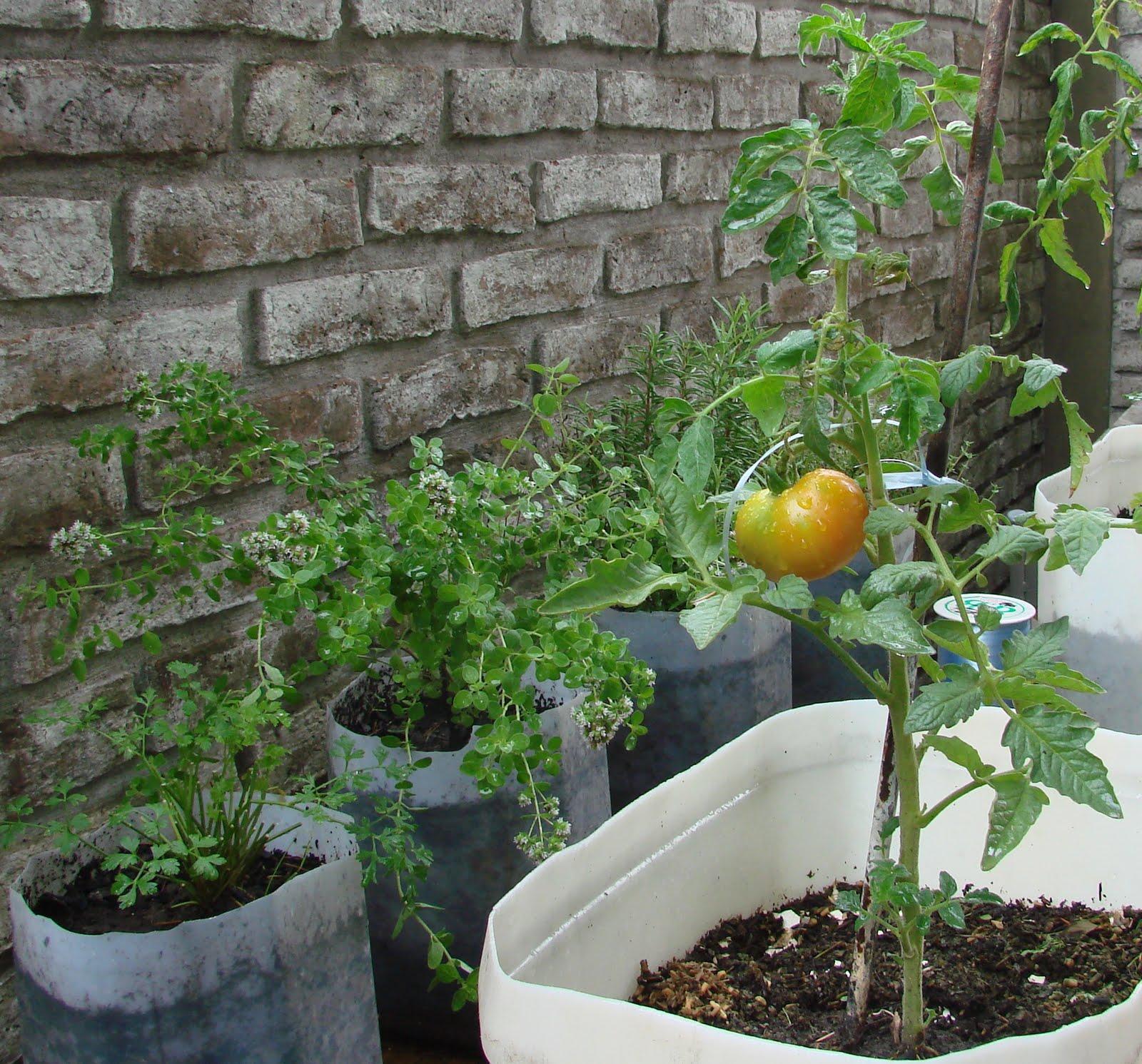 mi propio para so huerta organica en macetas ForHuerta De Aromaticas En Macetas