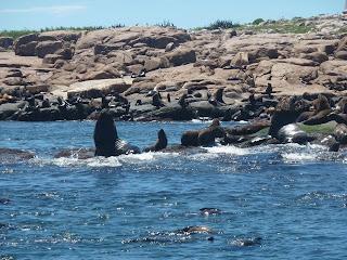 Zeeleeuwen en zeehonden.