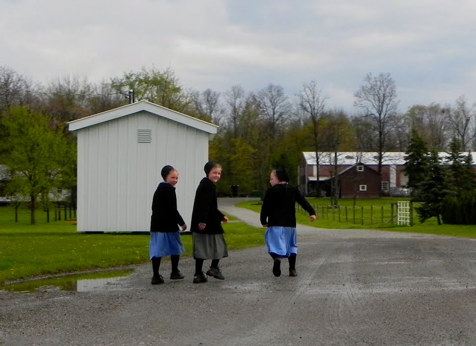 amish laws and customs