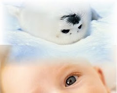 No to Seal Pup Hunting