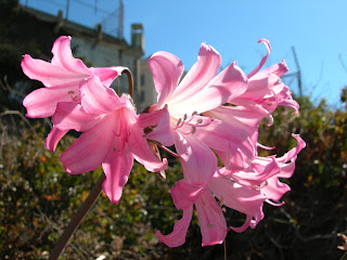 Lilies in Officers Row, 2007