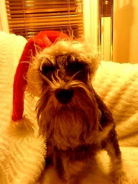 Dolly har pyntet seg til jul, matmor tar bilde