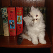 kedi&kitap ikilisi