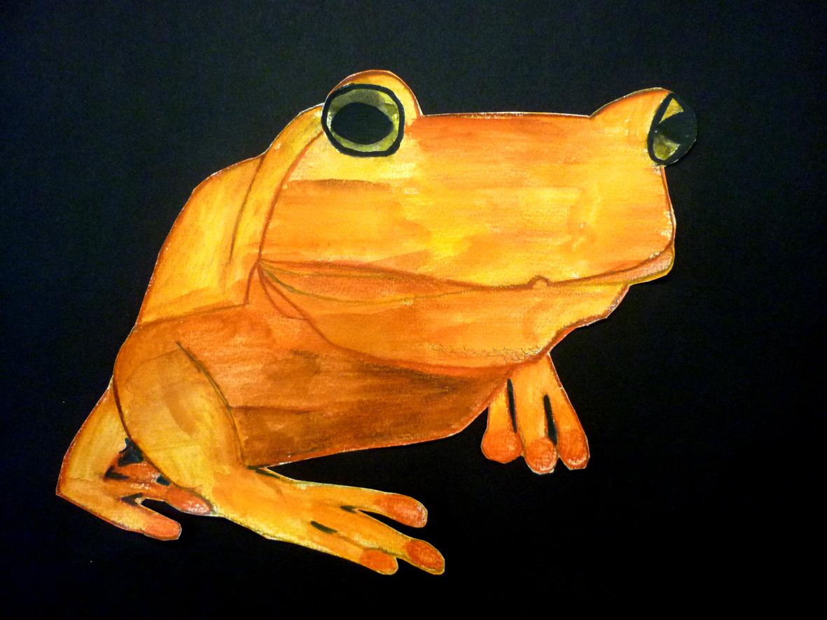 Farbstift-Frosch | Kunst im Schulhaus Rosenau