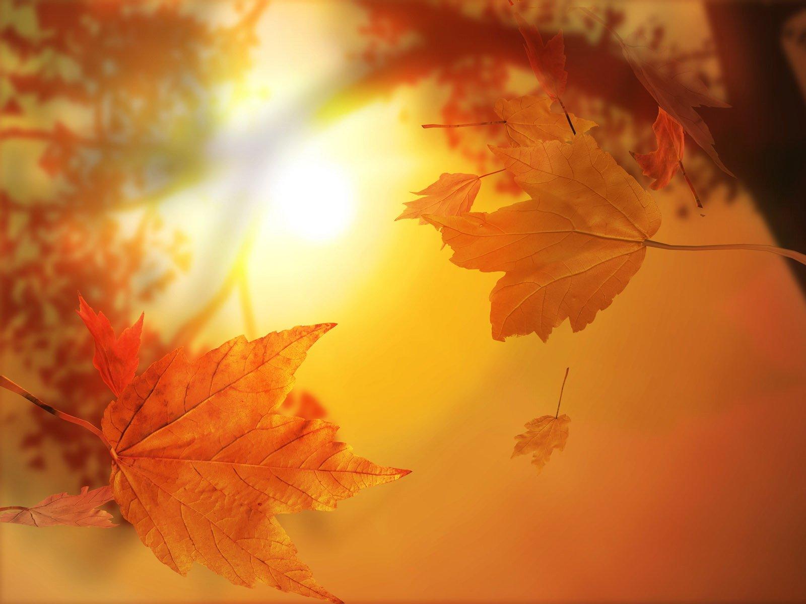 http://1.bp.blogspot.com/_o77OFVEKtzY/TKbkchs-API/AAAAAAAAAN0/J7h1DFqtW2E/s1600/fall+leaves.jpg