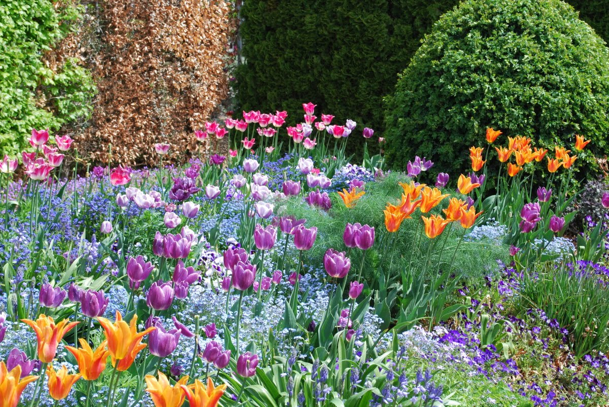 giverny-tulips