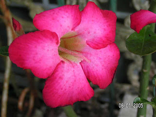 Beautiful Plant Image