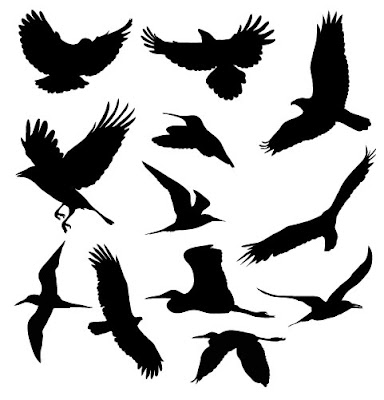 free bird vectors  - vector art