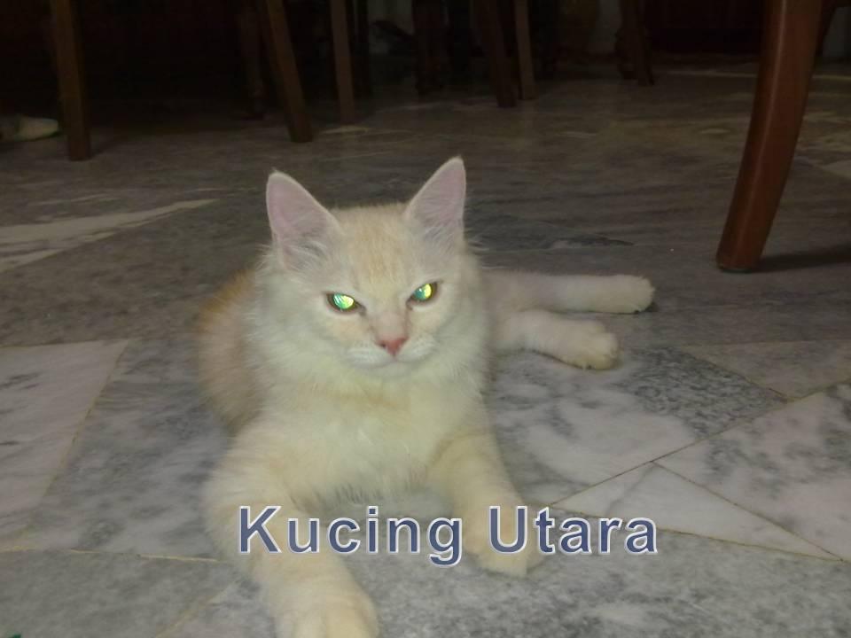 Kucing Utara Menangani Kucing Nakal