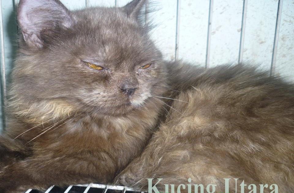 Kucing Utara Kucing Sakit Perut