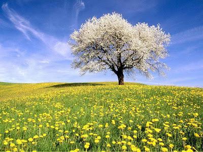 flori pasari peisaje