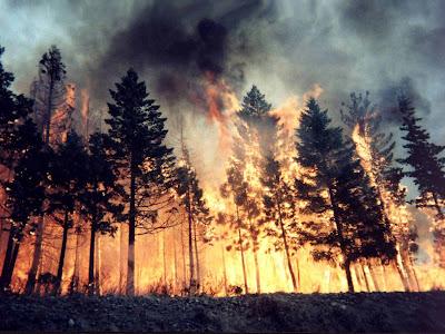 padure foc incendiu