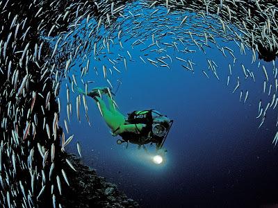 scafandru pesti ocean