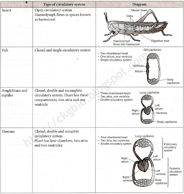 Circulatory systems in insects, fish, amphibians and hum