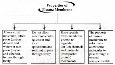 external image Propeerties+of+plasma+membrane.jpg
