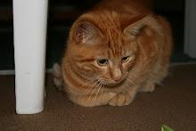 my cat romeo!