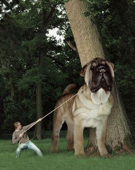 Vay Kızılbaş herif!Köpeğin boynuna muska asmış, öyle mi