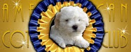Coton Puppies Available