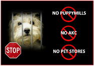 Just Say NO AKC
