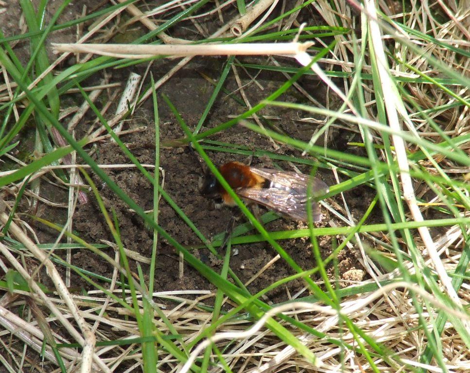Bee eggs hatching - photo#20