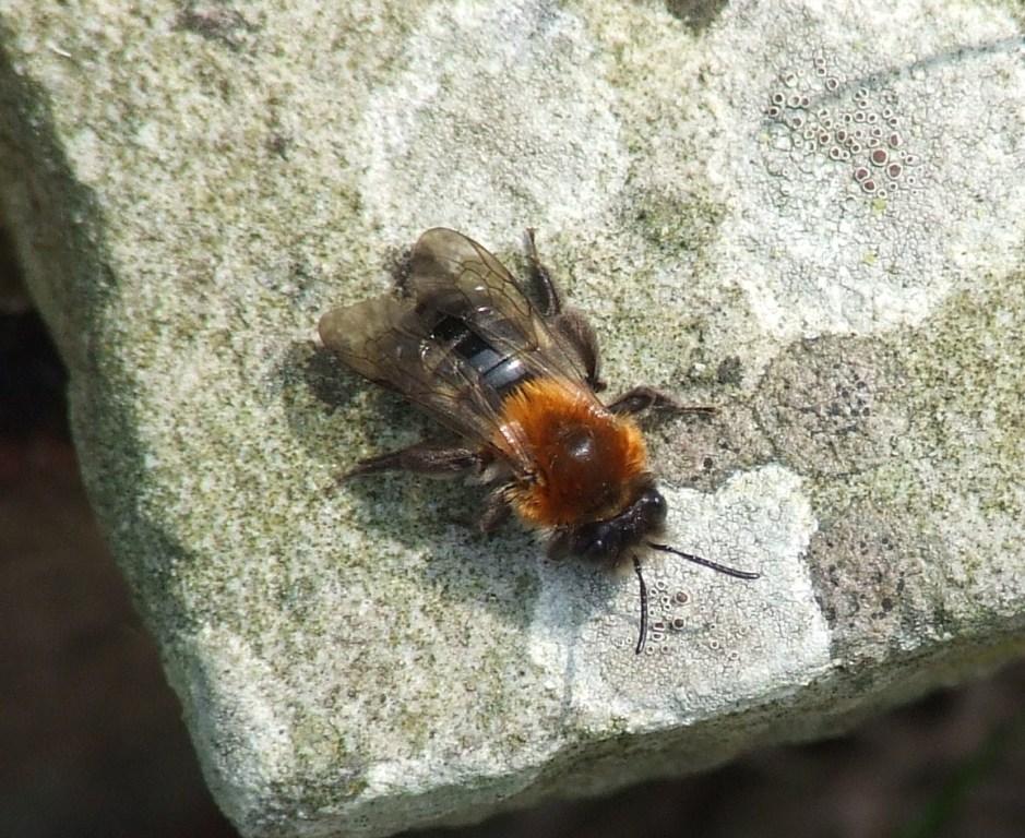 Bee eggs hatching - photo#18