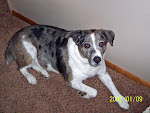 Favorite Dog #4.She is the daughter of T-Bone