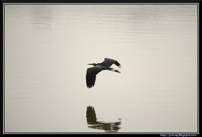 Bird flying over water