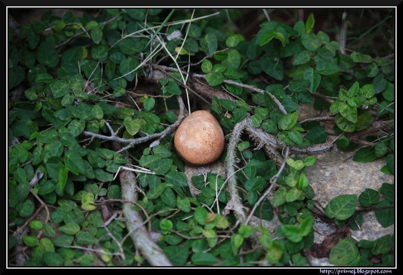 Misplaced Stone